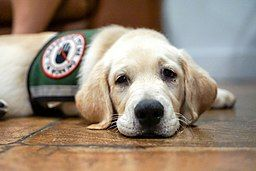 Accommodating Individuals With Assistance Animals in the Food Service Industry